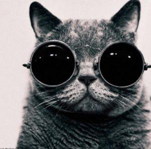 メガネか、カレーか、どんぐりか