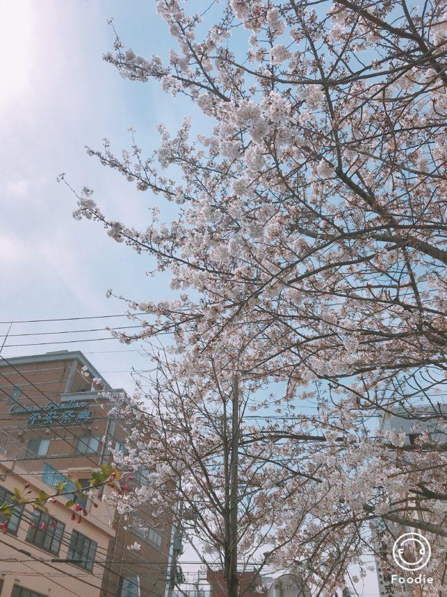 桜!まってーーーー!