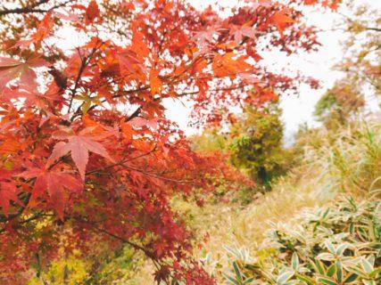 【お山登り部こぼれ話】紅葉の季節です