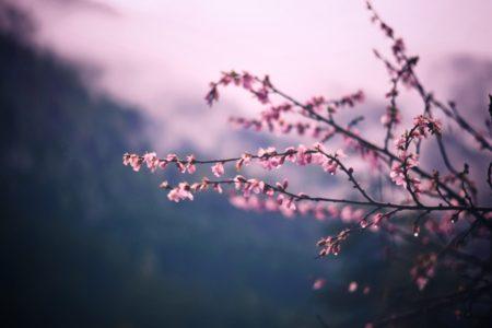 束の間の春の陽気☀️