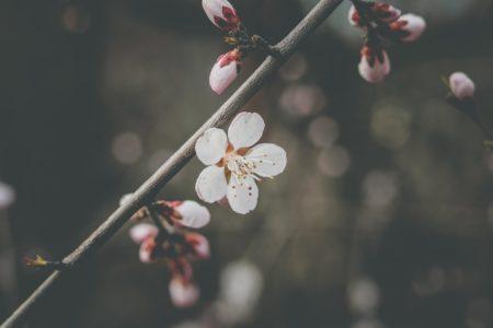 3月だ!春だ!