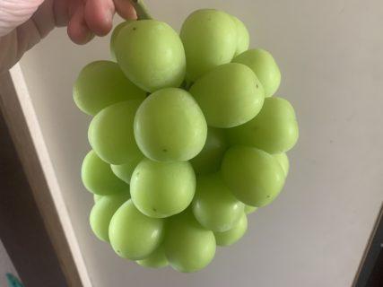 大好きなブドウの季節🍇